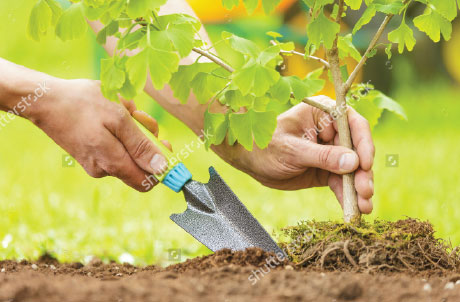 Ever Wondered How To Be A Better Gardener? Look No Further!