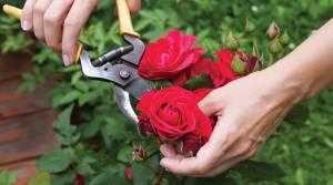 Weeding - Garden Maintenance